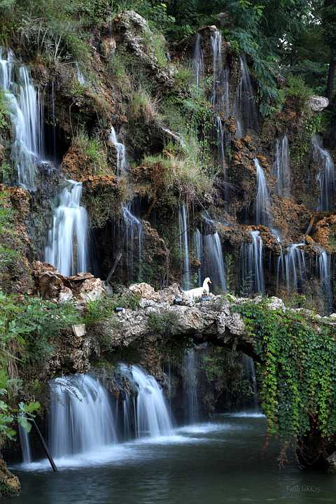 Waterfall Ente Swan Anzeigen - Poster and Wallpaper Download