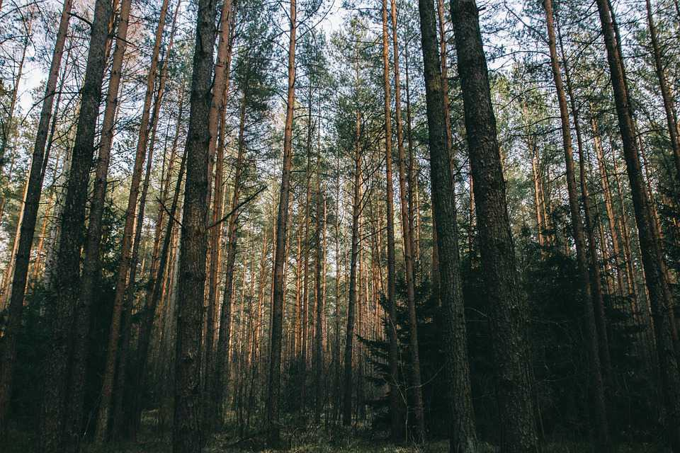 Forest Trees Nature Landscape - Poster and Wallpaper Download