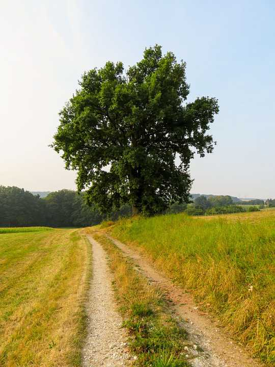 Path Field Landscape Tree Ruhe - Poster and Wallpaper Download