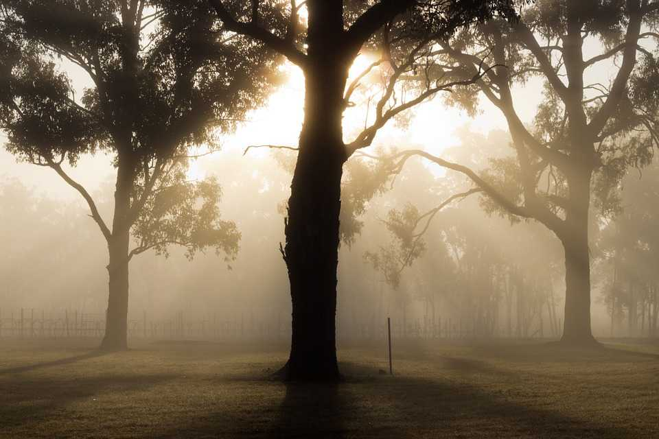 Tree Landscape Fog Nature Forest - Poster and Wallpaper Download