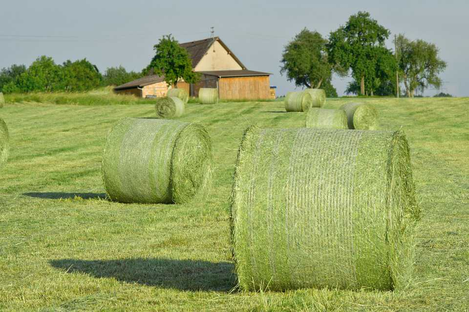 Hay Bales Straw Agriculture Field - Poster and Wallpaper Download