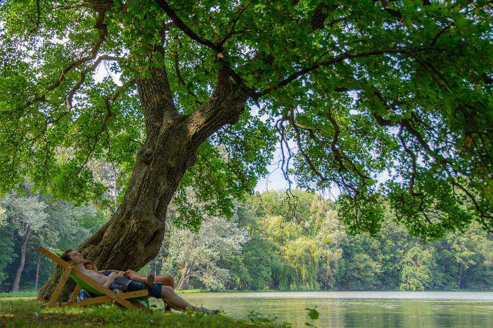 Nature Tree Park Landscape Summer - Poster and Wallpaper Download
