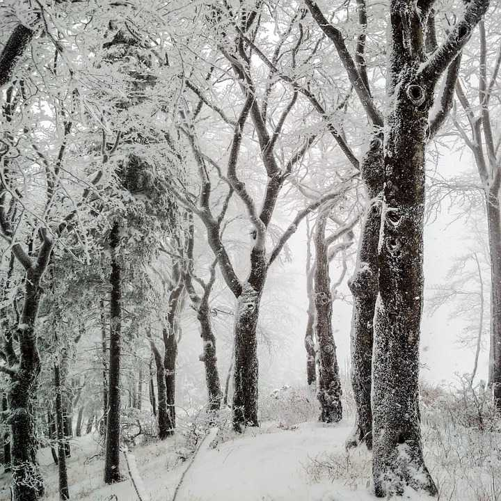 Trees Winter Snow Nature Cold Wintry - Poster and Wallpaper Download