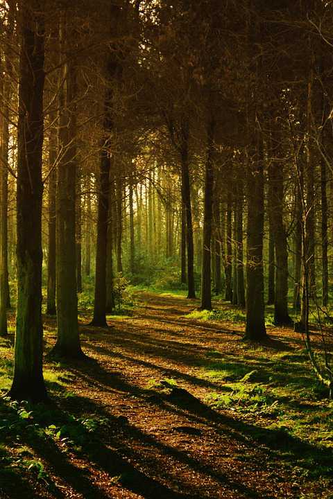 Woods Forest Nature Landscape Tree - Poster and Wallpaper Download