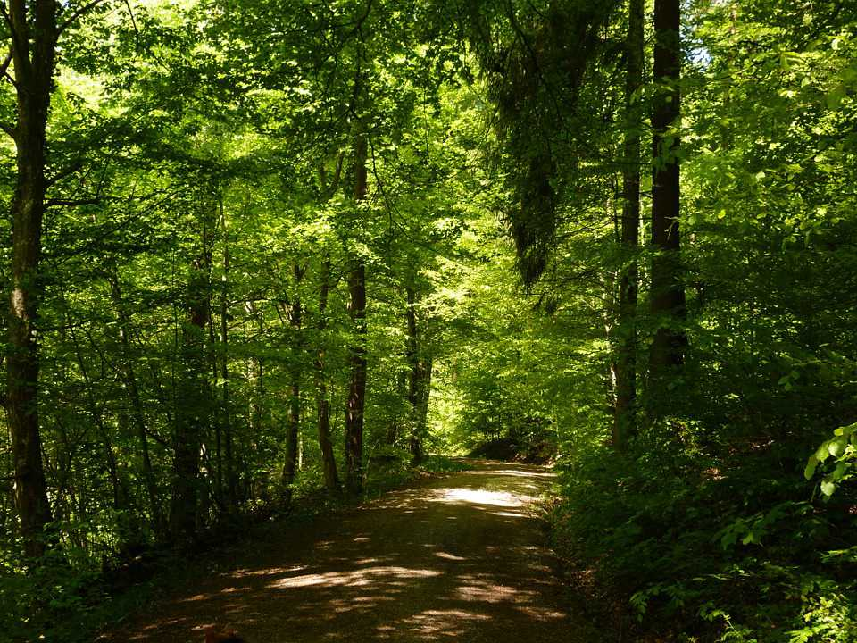 Forest Path Nature Landscape Tree - Poster and Wallpaper Download