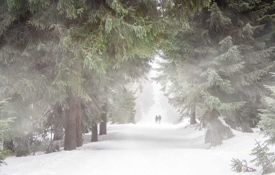 Forest People Nebel Winter Wandern - Poster and Wallpaper Download