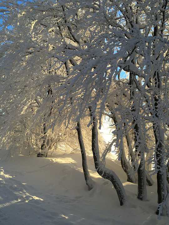 Winter Snow Forest - Poster and Wallpaper Download