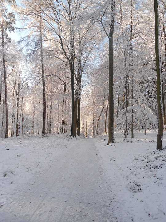 Winter Forest Snow Road - Poster and Wallpaper Download