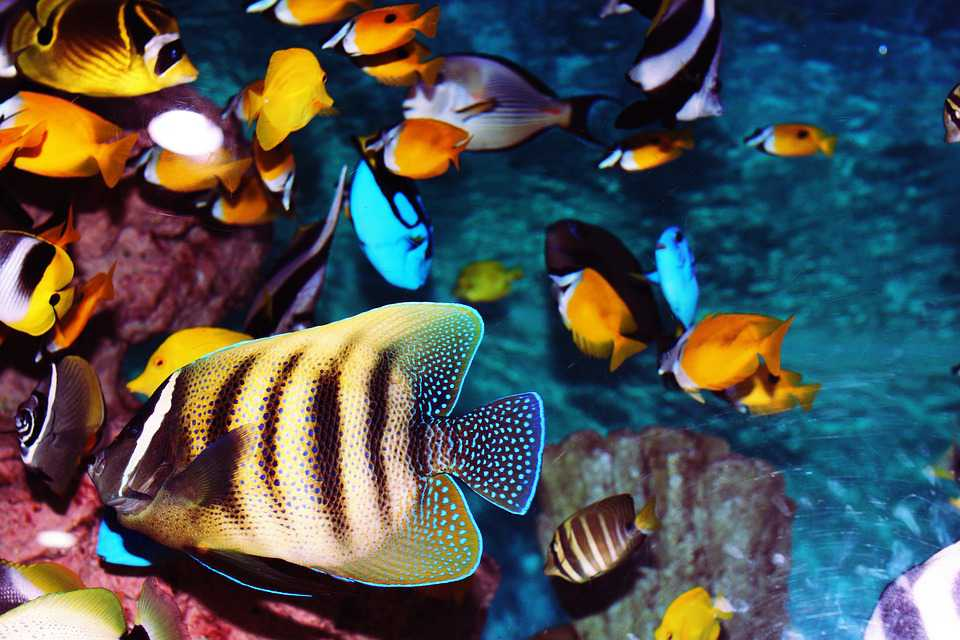 Tropische Fische Aquarium Fisch - Poster and Wallpaper Download