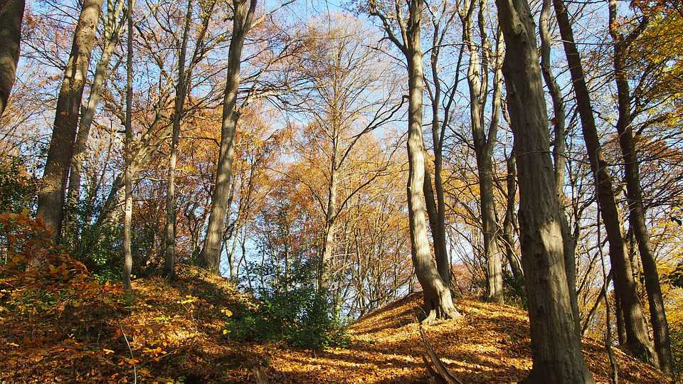 Forest Autumn Schatten Trees Herbstlaub - Poster and Wallpaper Download