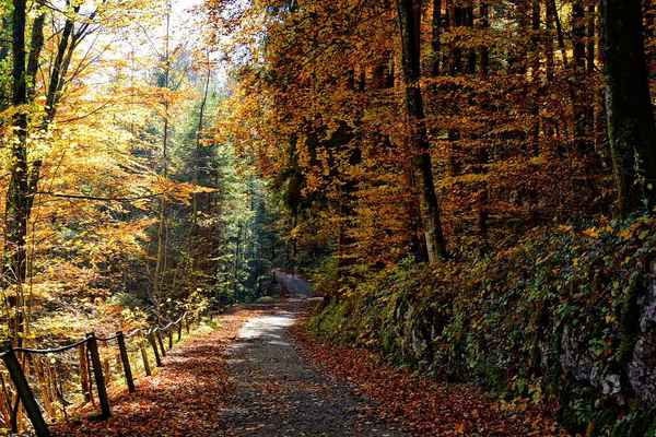 Poster Autumn Path Forest Trees Nature Download