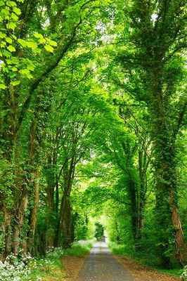 Poster Straße Forest Nature Trees Download