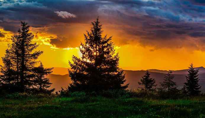 Poster Sunset Tree Nature Sun Download