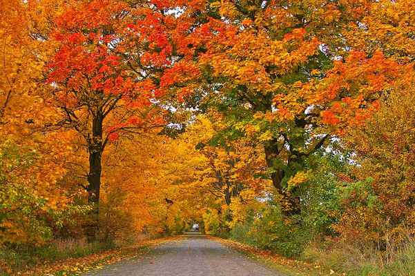 Poster Autumn Allee Trees Path Straße Download