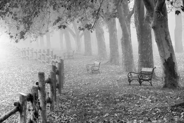 Poster Autumn Nebel Tau Nature Download