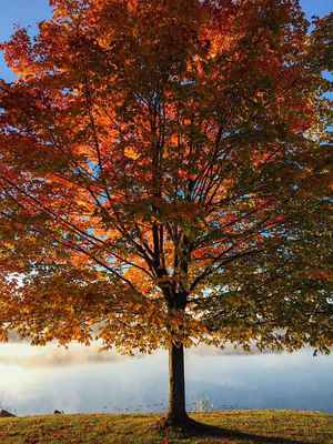 Poster Sea Tree Autumn Laub Park Saison Download