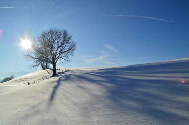 Poster Winter Snow Allgäu Back Light Trees Shadow Download
