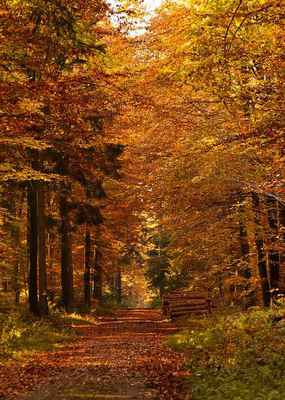 Poster Forest Path Autumn Fall Leaves Mood Nature