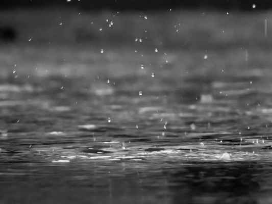 Poster Macro Rain Drops Black And White Close Download