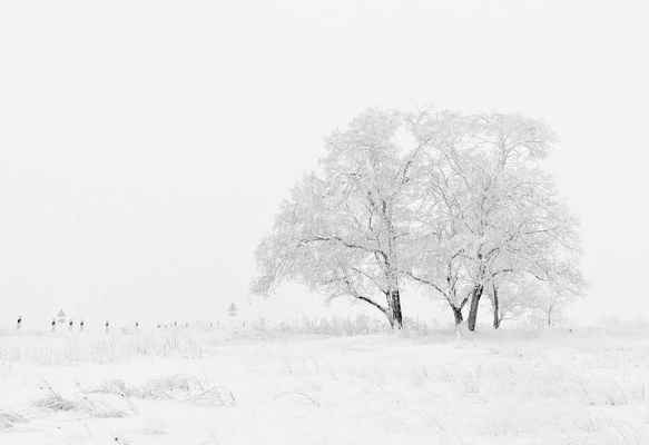 Poster Winter Nature Season Trees Sky Snow White Download