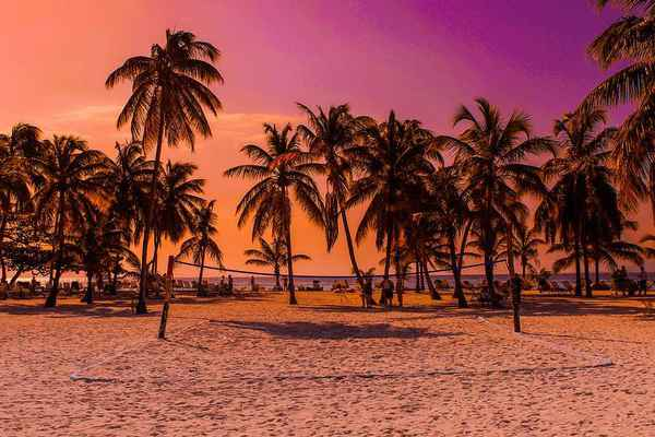 Poster Caribbean Beach Sunset Holiday Sea Palm Trees Download