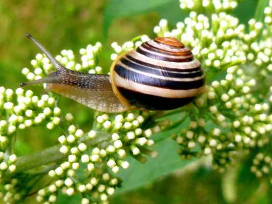 Poster Snail Garden Shell Probe Mollusk Slowly Nature Download