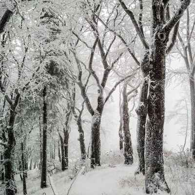 Poster Trees Winter Snow Nature Cold Wintry Download