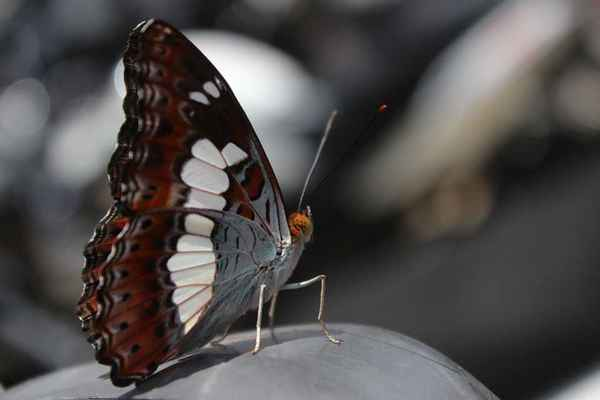 Poster Macro Butterfly Macro Animal Insect Wing Download
