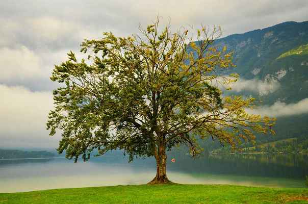 Poster Tree Lake Nature Green Outdoor Environment Natural Download