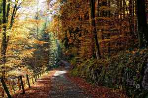 Poster Autumn Path Forest Trees Nature