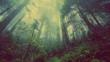 Poster Forest Trees Nebel Nature Mystischer