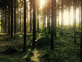 Poster Forest Trees Sunlight Woods Environment Nature Green