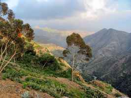 Poster Eritrea Mountains Valley Forest Trees Scenic Countryside
