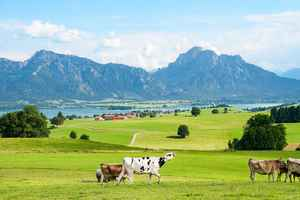 Poster Allgäu Ostallgäu Bavaria Mountains Mountain Range Tegelberg Download