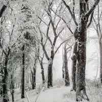 Poster Trees Winter Snow Nature Cold Wintry