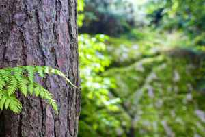 Poster Forest Tree Bark Bokeh Nature Trunk Wood