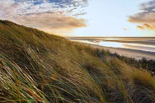 Poster Düne Beach Coast Gras Wind Nature Entspannung Download