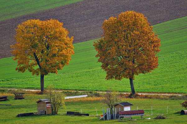 Poster Autumn Trees Nature Herbstlaub Meadow