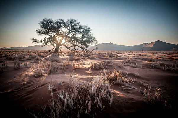 Poster Afrika Namibia Safari Sunrise Sanddüne Tree Sunset
