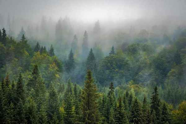 Poster Nature Forest Nebel Misty Download